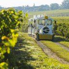 Visite de Chalonnes en petit train touristique