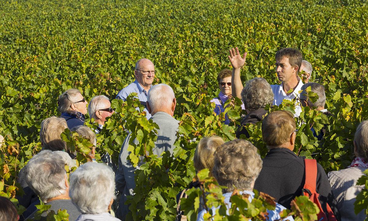 Groupe en visite dans le vignoble