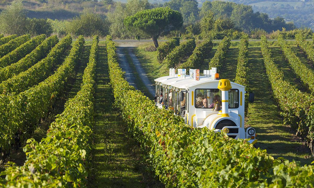 Petit train touristique dans le vignoble du Layon
