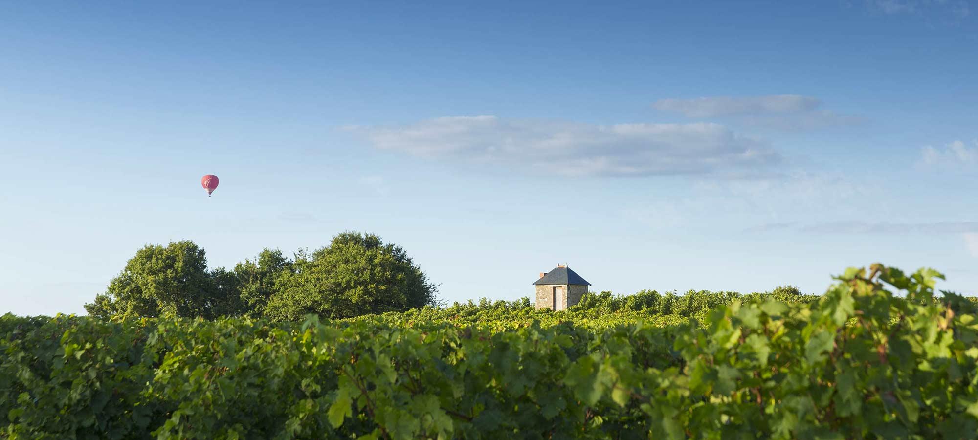 Vignoble dans les vallées de la Loire et du Layon