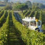 Visite du vignoble en petit train touristique pour les groupes