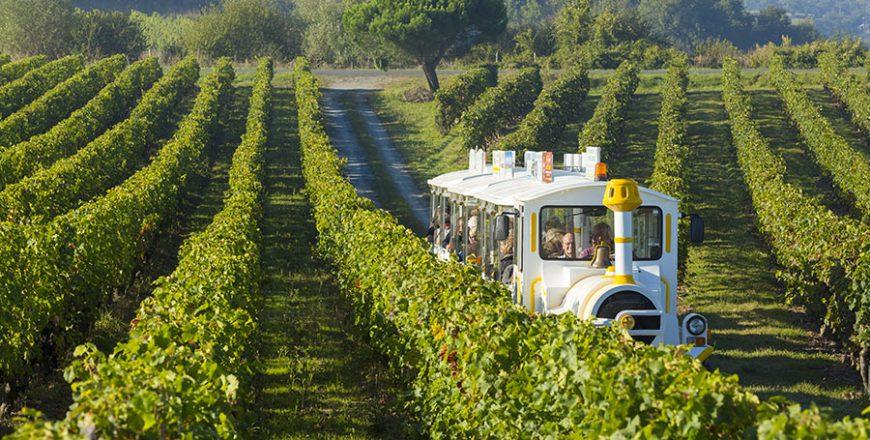 Visitez le vignoble de la Loire et du Layon