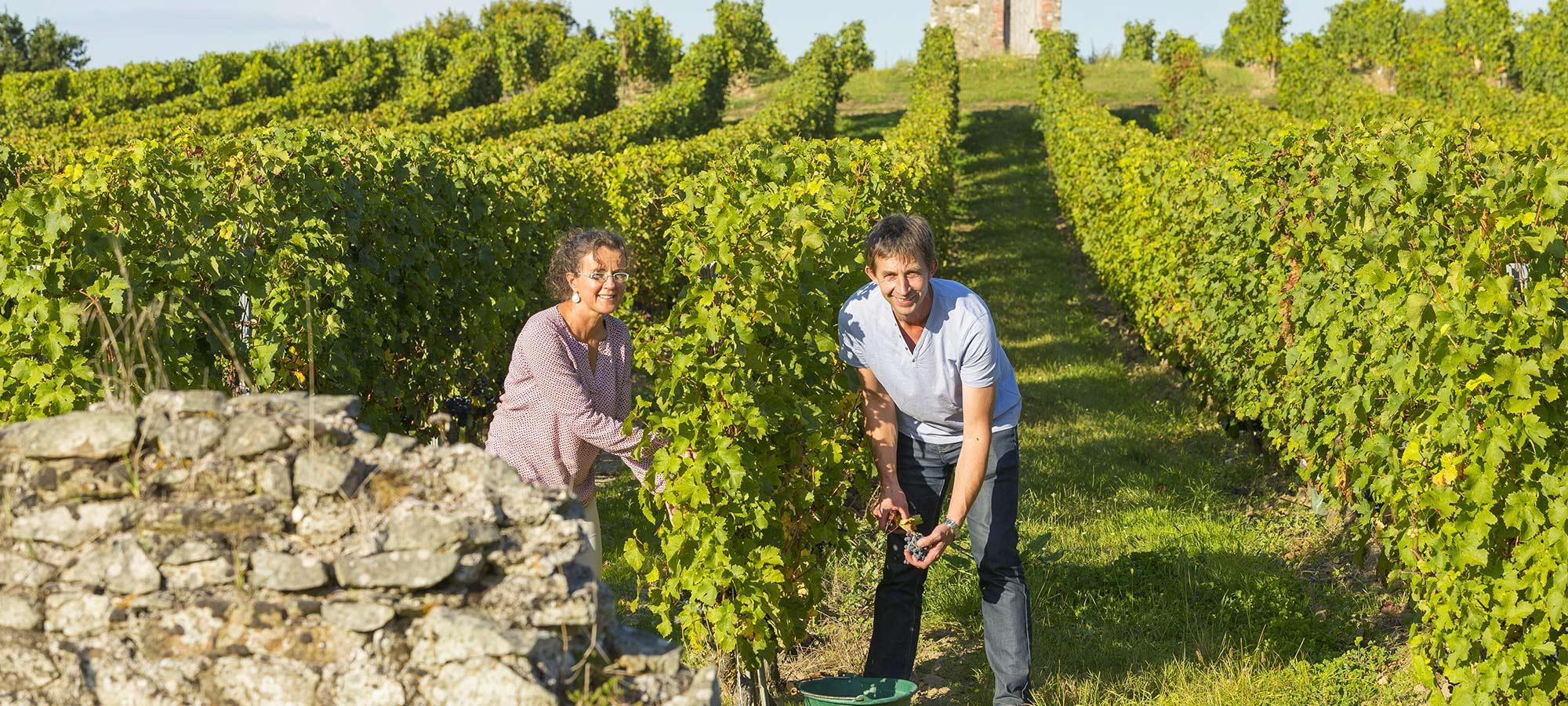 Viticulteurs dans leur vignoble