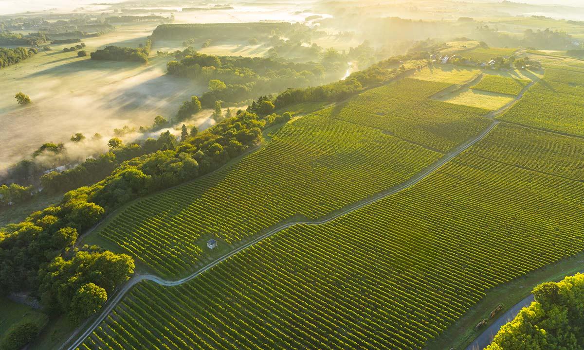 Vue aérienne du vignoble en vallée du Layon